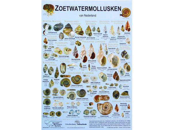 zoetwatermollusken-zoekkaart