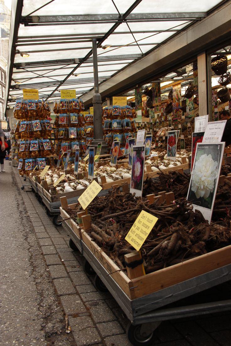 Amsterdam: @ the tulip market, selling bulbs of all varieties