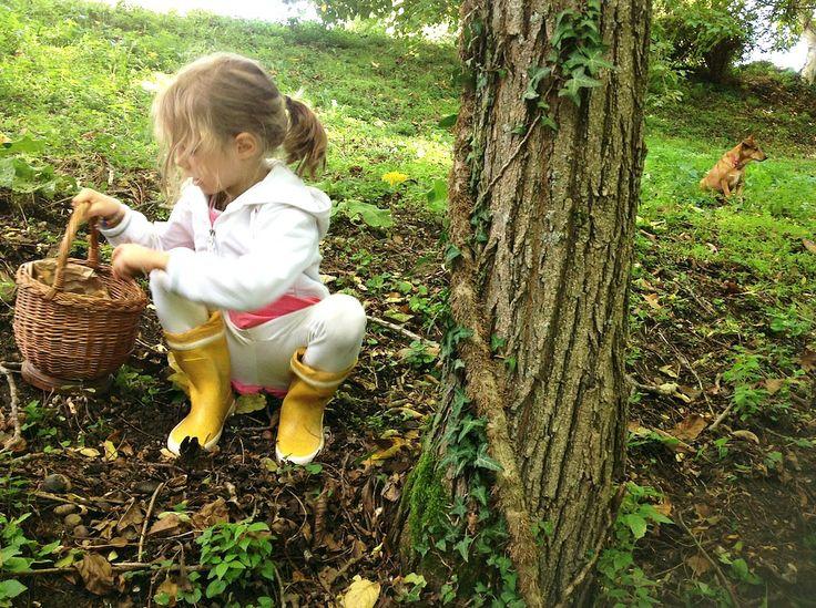 Ottobre 2013. Oggi abbiamo raccolto le noci nel bosco...
