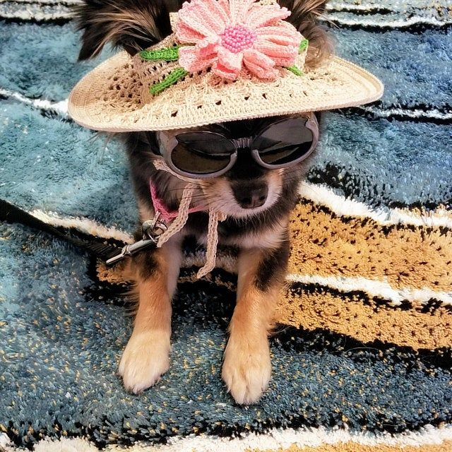 Hat For Dog Orchid Dog Sun Hats Party Hats For Etsy In 2020 Dog Hat Puppy Hats Crochet Dog Hat