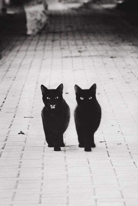 Cats #cats #photo