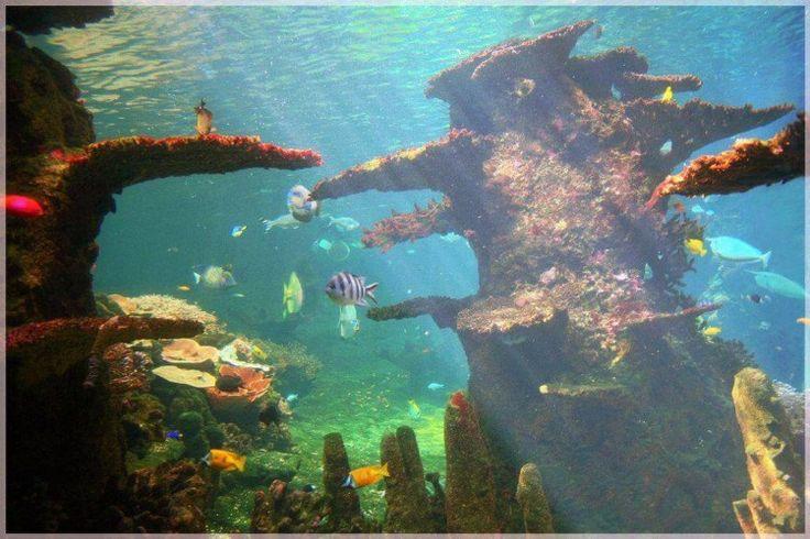 60 Jenis Ikan hias Air Tawar Aquarium lengkap dari A-Z