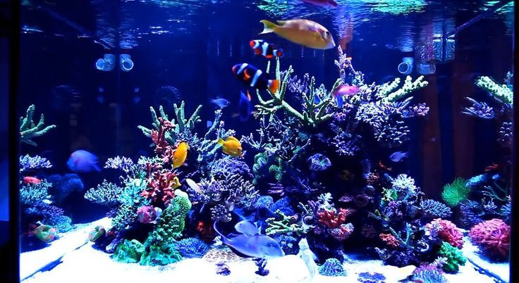 The 25 best saltwater aquarium setup ideas on pinterest for Fish tank ice method