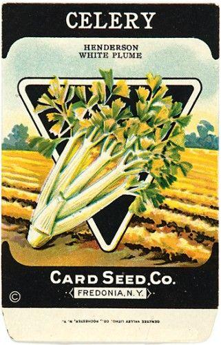 Celery. (Henderson White Plume)  130 x 85 mm.  Original vintage seed packets, chromolithographs, printed by Genesee Valley Litho., N.Y, c.1920. #vintage #advertisement #vegetable