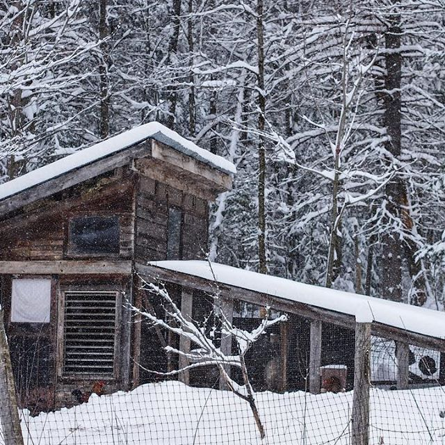 We spent the day shovelling, moving, and clearing snow. We are back to a winter wonderland. #chickencoops #ontariohighlands #thelifeofahomesteader #bedrockandbrambles #thequietwinter