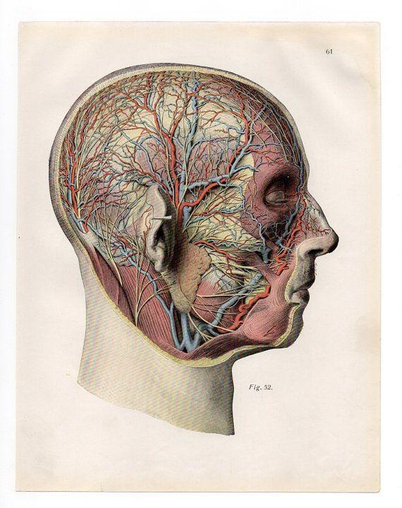 anatomy art vintage print head diagram antique poster. Black Bedroom Furniture Sets. Home Design Ideas