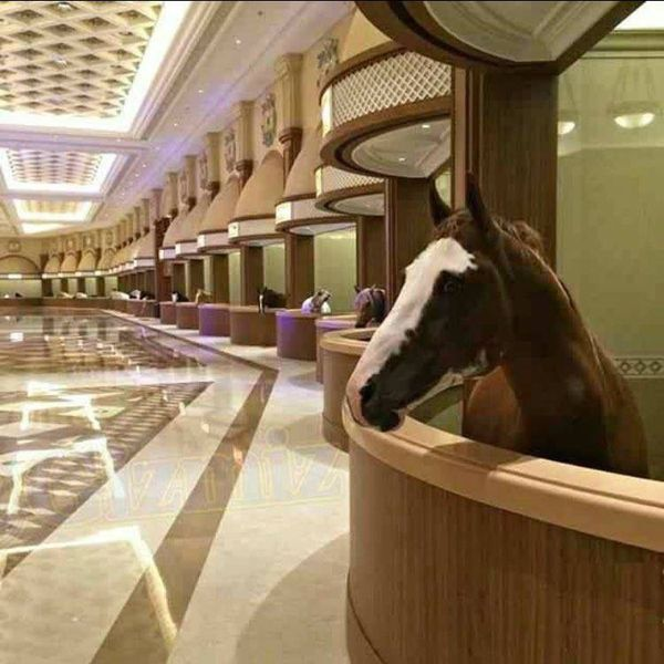 Now, this is fancy horse accommodation!