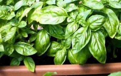 Mini-orto da balcone: le 5 piante più facili da coltivare