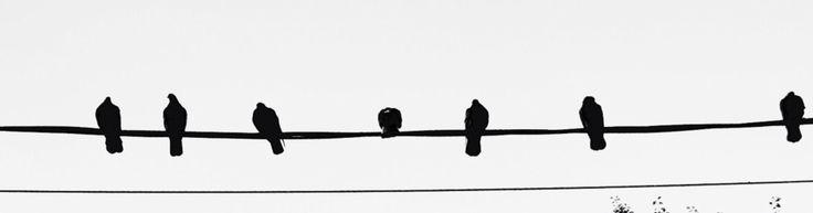 Birds in the autumn