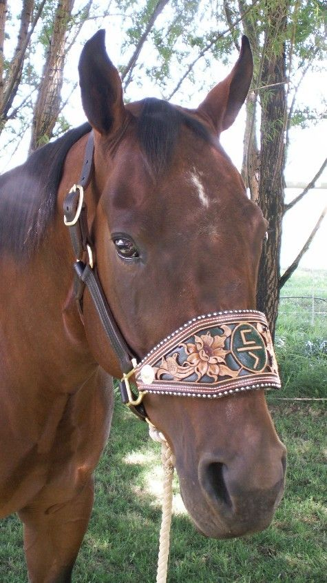 bronc halter noseband template - 527 best saddle stuff images on pinterest templates