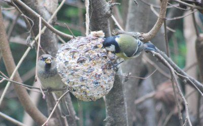 17 migliori immagini su animali uccellini nidi - Primavera uccelli primavera colorazione pagine ...