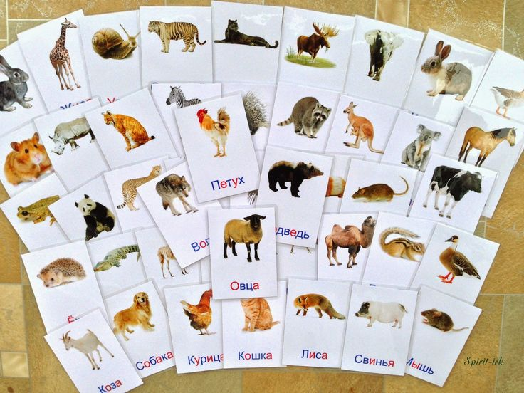 Сделано Любовью: Карточки Домана. Животные