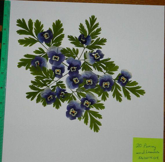 Real Dried and Pressed Flowers Beautiful blue by TickiesTreasures, $4.99