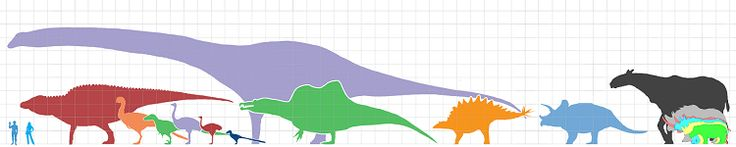 Artist's impression showing the sizes of different animals, each grid segment is 1 square metre. From left to right: 1) Human male 2) Human female 3) Ornithopod dinosaur from about 75 million years ago (Shantungosaurus giganteus) 4) Theropod dinosaur from about 70 million years ago (Gigantoraptor) 5) Theropod dinosaur from about 125 million years ago (Utahraptor ostrommaysorum) 6) Elephant bird from about 1000 years ago (Aepyornis maximus) 7) Ostrich from the present (Struthio camelus) 8)…