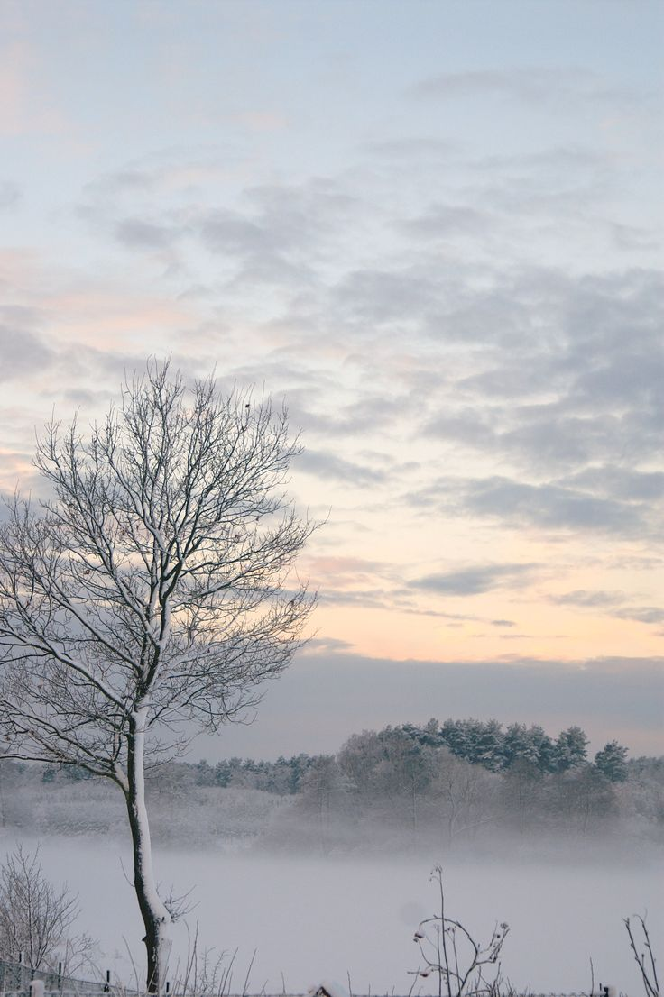 Winter morning, Village, Forest, pink, purple sunrise,  snow,