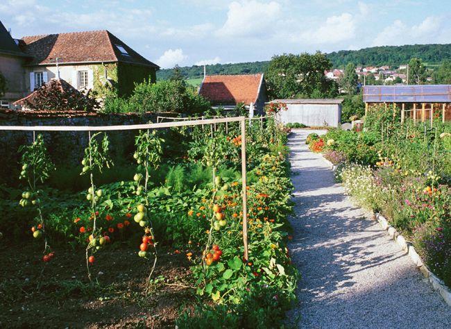 Hubert Fontaine vous explique en images pourquoi et comment bien tuteurer les tomates au potager.