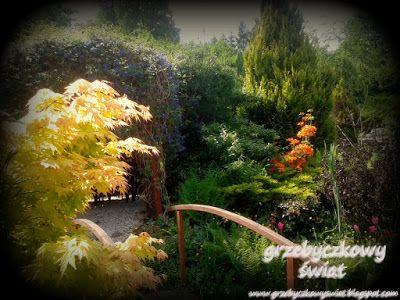 Ogród pełen promieni słonecznych...