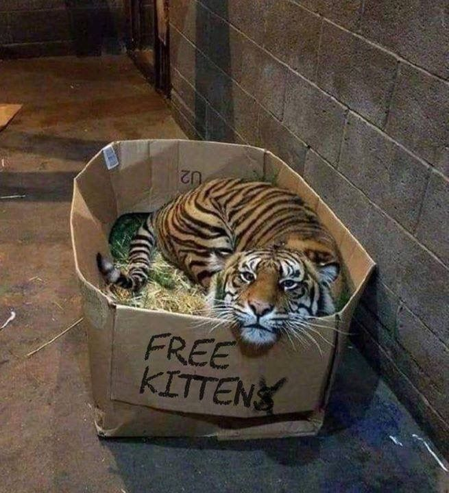 Free Kitten Funny Animals Funny Animal Pictures Cute Animals
