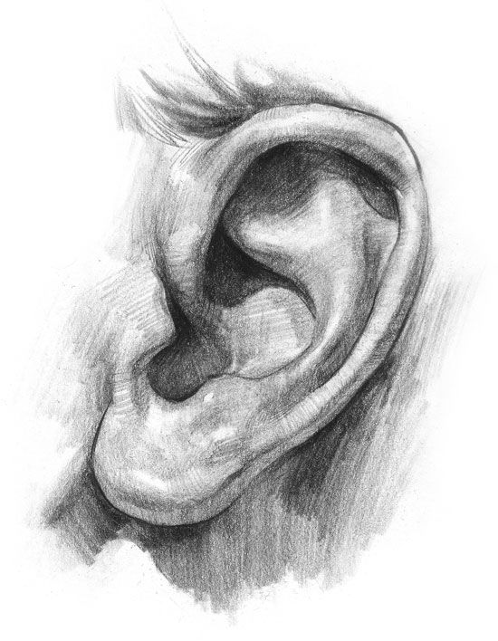 How to draw ears: Drawings Ears, Drawing Sketch, Drawings Faces, Charcoal Drawings, Art Drawings, Pencil Drawings, Ears Drawings, Drawings Tutorials, Tutorials Drawings