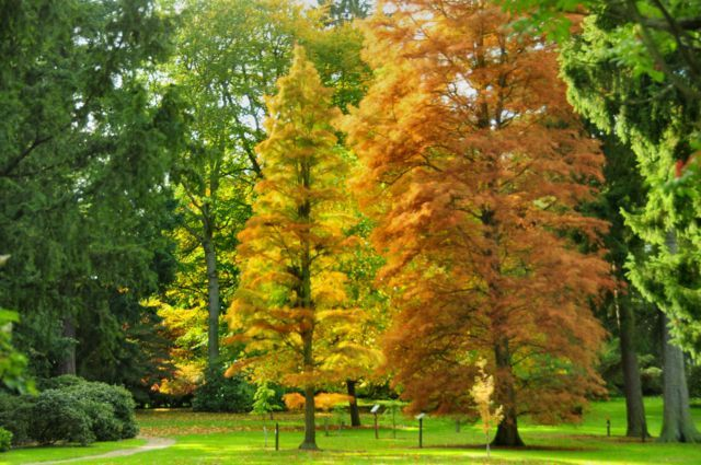 Arley Arboretum - Shropshire Tourism & Leisure Guide