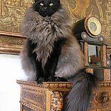 The Katharine Hepburn of cats - Imgur
