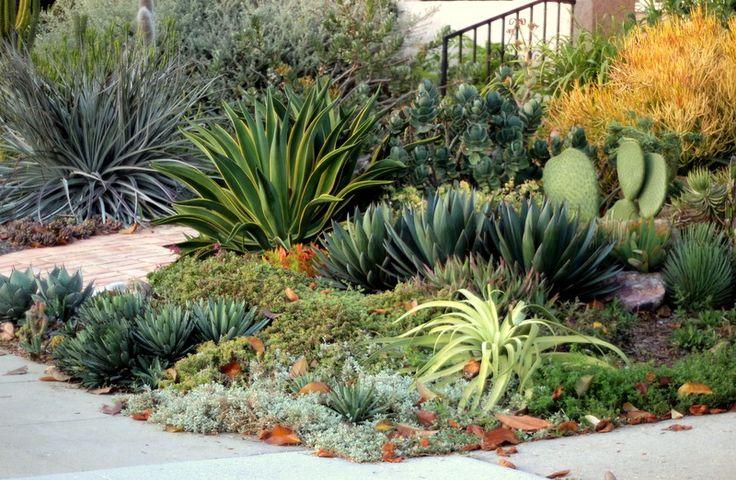 les 45 meilleures images du tableau jardin pour le sud sur pinterest rocaille cactus et. Black Bedroom Furniture Sets. Home Design Ideas