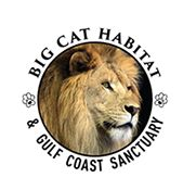 VENICE FLORIDA AREA Big Cat Habitat and Gulf Coast Sanctuary is an ever-growing large-animal rescue in eastern Sarasota County. Founded in 1987 by Kay Rosaire, the nonprofit sanctuary is a permanent home for dozens of exotic animals, offers placement for animals in need, and works to educate the public