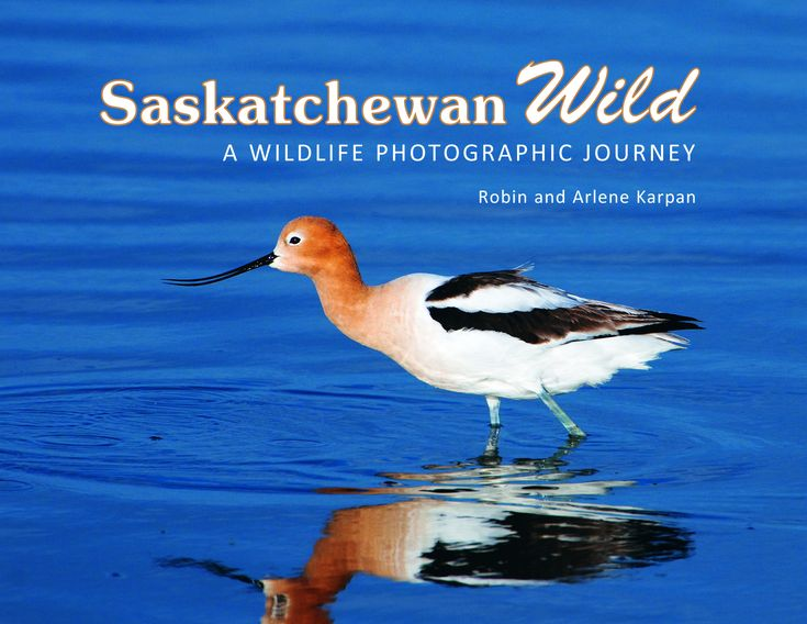 Saskatchewan Wild is a personal photographic journey, a taste of the many wildlife adventures possible in Saskatchewan. It is both a celebration of our wild creatures and wild places, and a reminder of what we might lose if we're not careful.