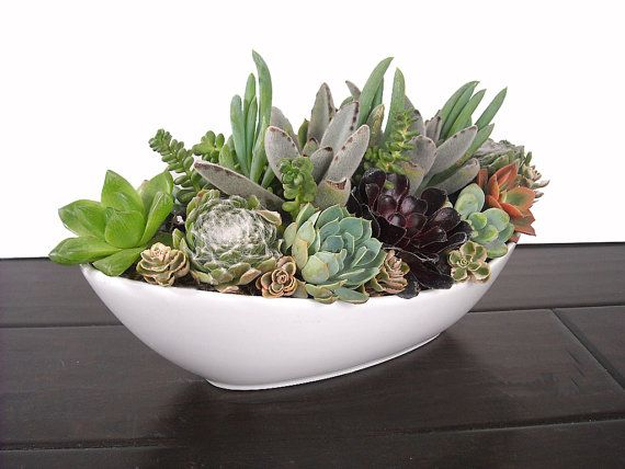 Succulent Mix 10 5 Quot Boat Shaped White Ceramic Pot