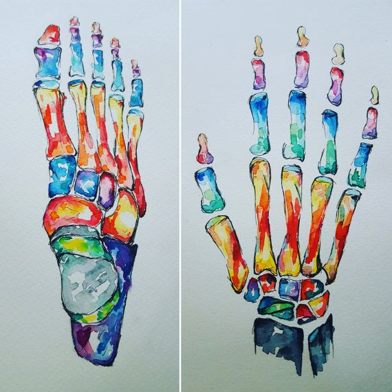 Watercolour Anatomy Art- Hand and Foot SET