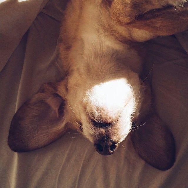 mutt dog cute
