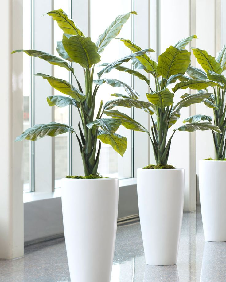 218 best images about planters on pinterest - Tall office plants ...