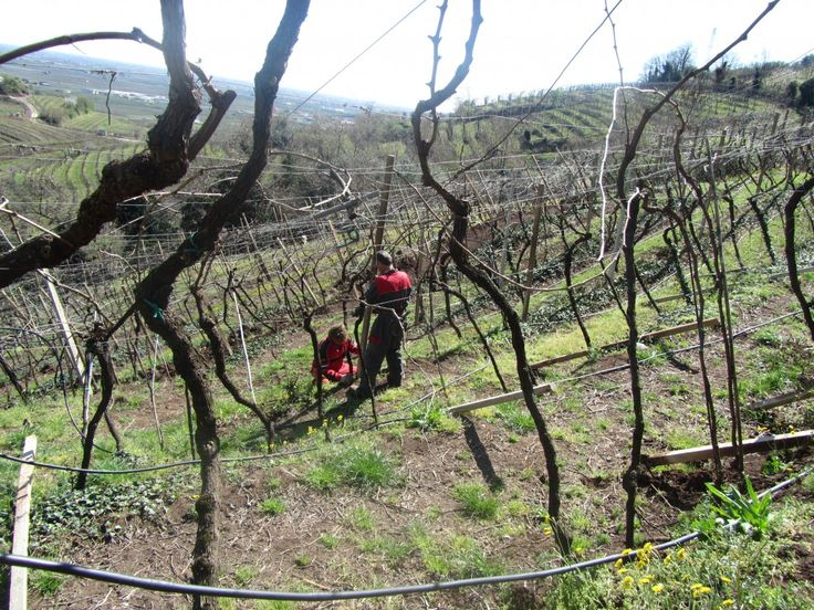 After the atmospheric conditions we had in the past years, some areas didn't bear the excessive rains.  In these days we are therefore working to restore the damaged areas.  The difficulty is also due to the peculiar declivity of our vineyards, in particular of Magnavacche hill, the oldest one from where our story started.