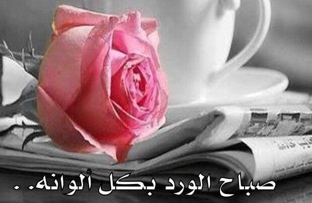 اجمل كلمات صباح الخير للحبيب تويتر Rose Plants