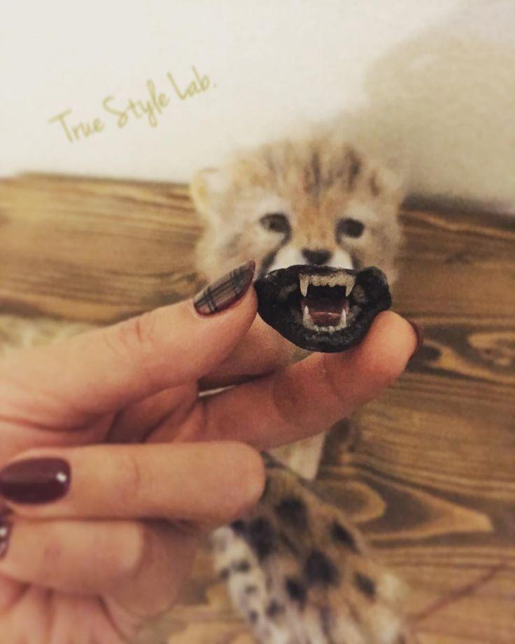 Getting a full denture... / 総入れ歯入りまーす。 #needlefelt #cheetah #cub #dentures #truestylelab #clay #チーター #羊毛フェルト #入れ歯 #needlefelting #wool #felt #art #artist #sculpture #realistic #lifelike