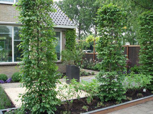 Zuilbomen voor in de voortuin garden pinterest tuinieren voortuinen en tuin - Moderne tuin ingang ...