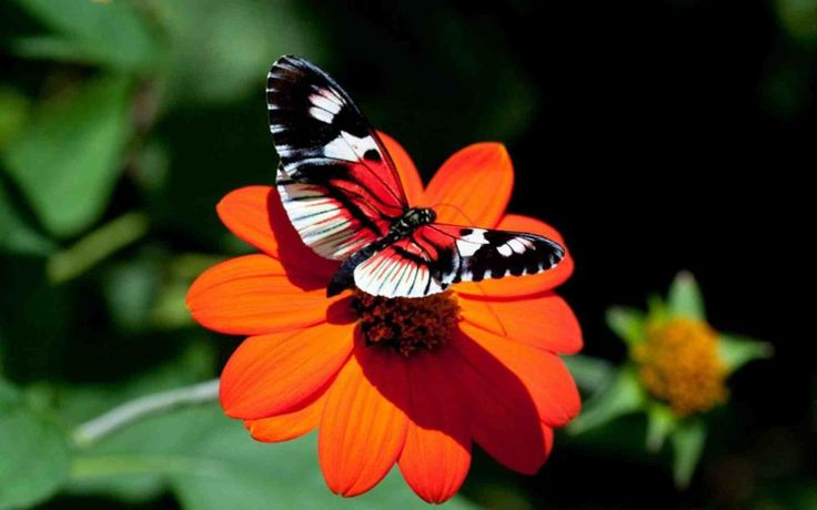 Beautiful Bright Butterfly . . . . . . .  by anildudhat2014