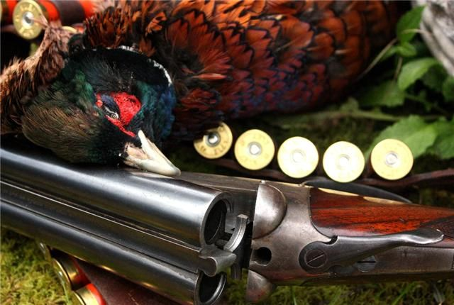 Pheasant shooting Annandale Arms Hotel