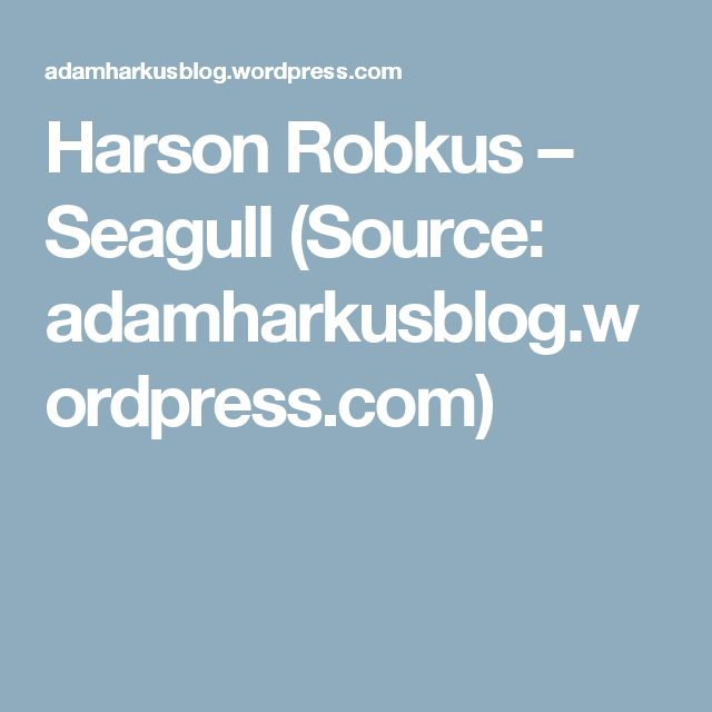 Harson Robkus – Seagull (Source: adamharkusblog.wordpress.com)