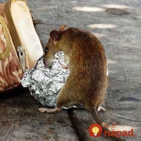 Na zimu sa nám potkany nasťahovali do garáže a nefungoval na ne ani jed z obchodu: Toto nám poradil dedko a odvtedy sme nevideli ani jediného!