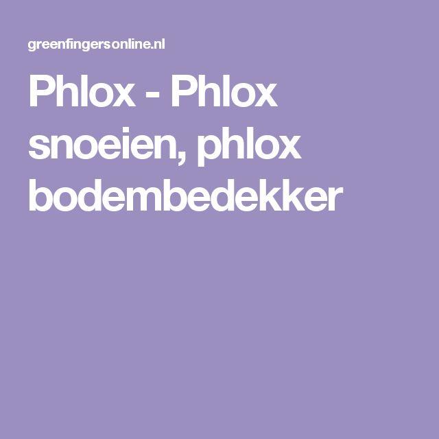Phlox - Phlox snoeien, phlox bodembedekker