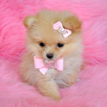 Dress up not just your dolls, but pups as well! :) This lil puppy is sporting a pastel pink bow and a pink studded barrette