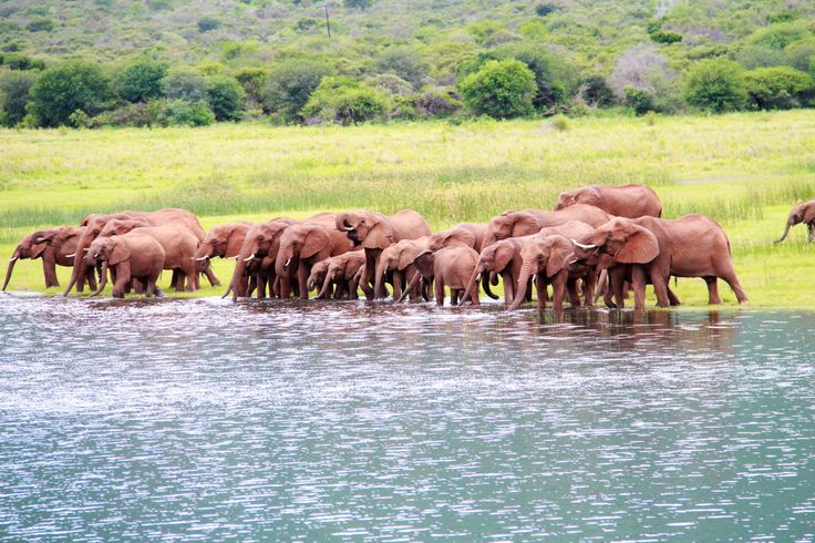 Elephant on the shores of Lake Jozini taken on Ghost Mountain Safaris boat cruise