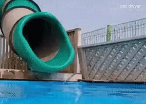 Share this A corgi dives into the pool using the slide Animated GIF with everyone. Gif4Share is best source of Funny GIFs, Cats GIFs, Reactions GIFs to Share on social networks and chat.