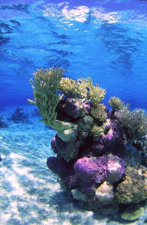 Sous l'eau à Rangiroa, en Polynésie Française.