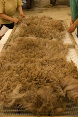 How to Wash Sheep's Wool   eHow UK
