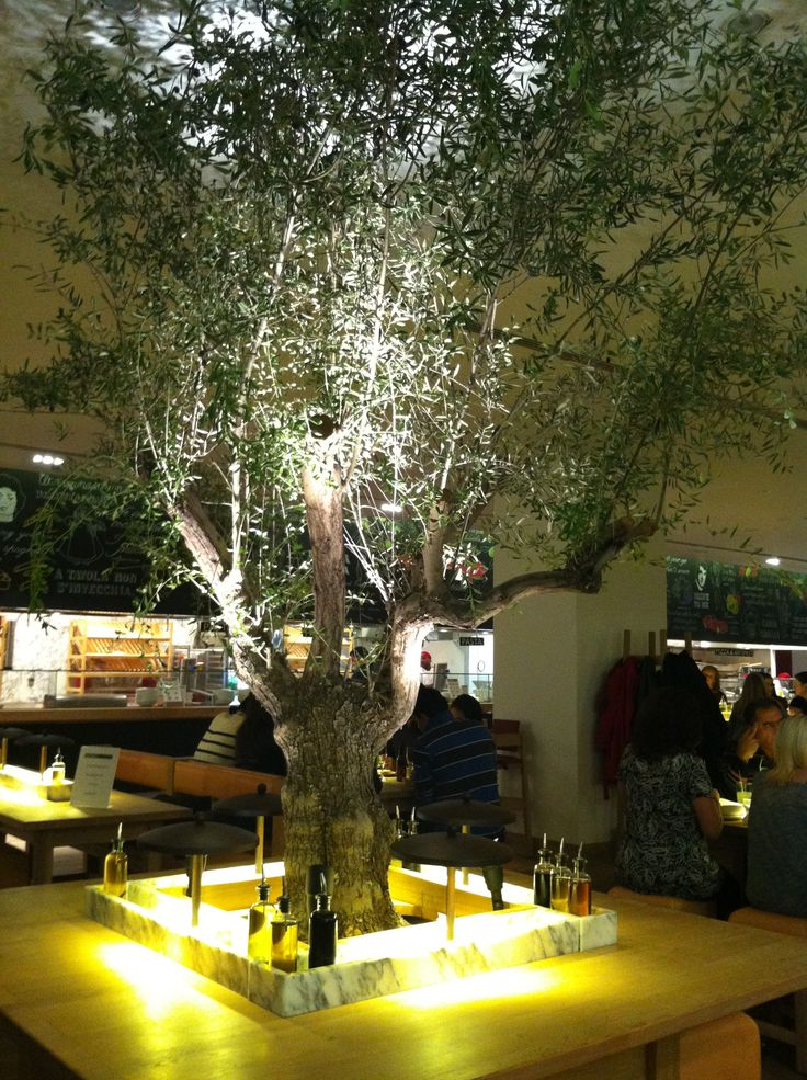 17 best images about indoor olive tree on pinterest - Italian restaurant winter garden ...