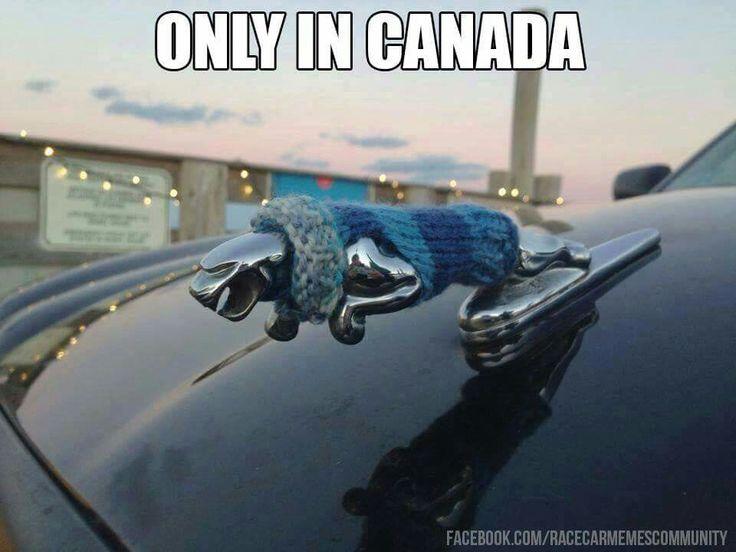 little woolly coat for jaguar hood figure - only in Canada
