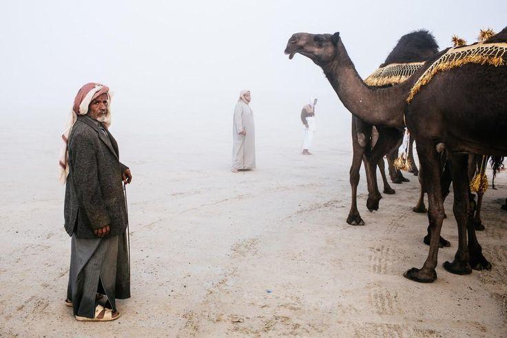 12月下旬に行われたミスコンは、ミス・ユニバースだけではない。UAEの郊外で、オマーンやサウジアラビア、クウェート、アラブ首長国連邦の遊牧民たちが一堂に会し、ラクダのミスコンで有名な「アル・ダフラ祭り」が開催された。 この祭りでは、競売、レース、品評会、さらには最も美しく足が速く「多く乳を出す」ヒトコブ・ラク