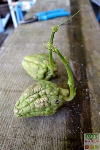 Les 518 meilleures images propos de c te jardin sur - Quand planter des framboisiers ...